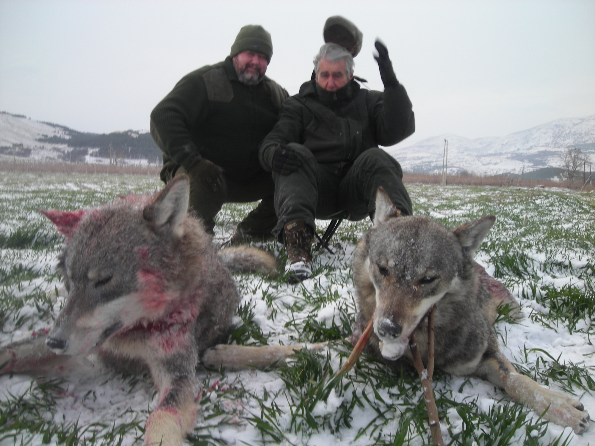 Wolf Hunting Trip in Macedonia