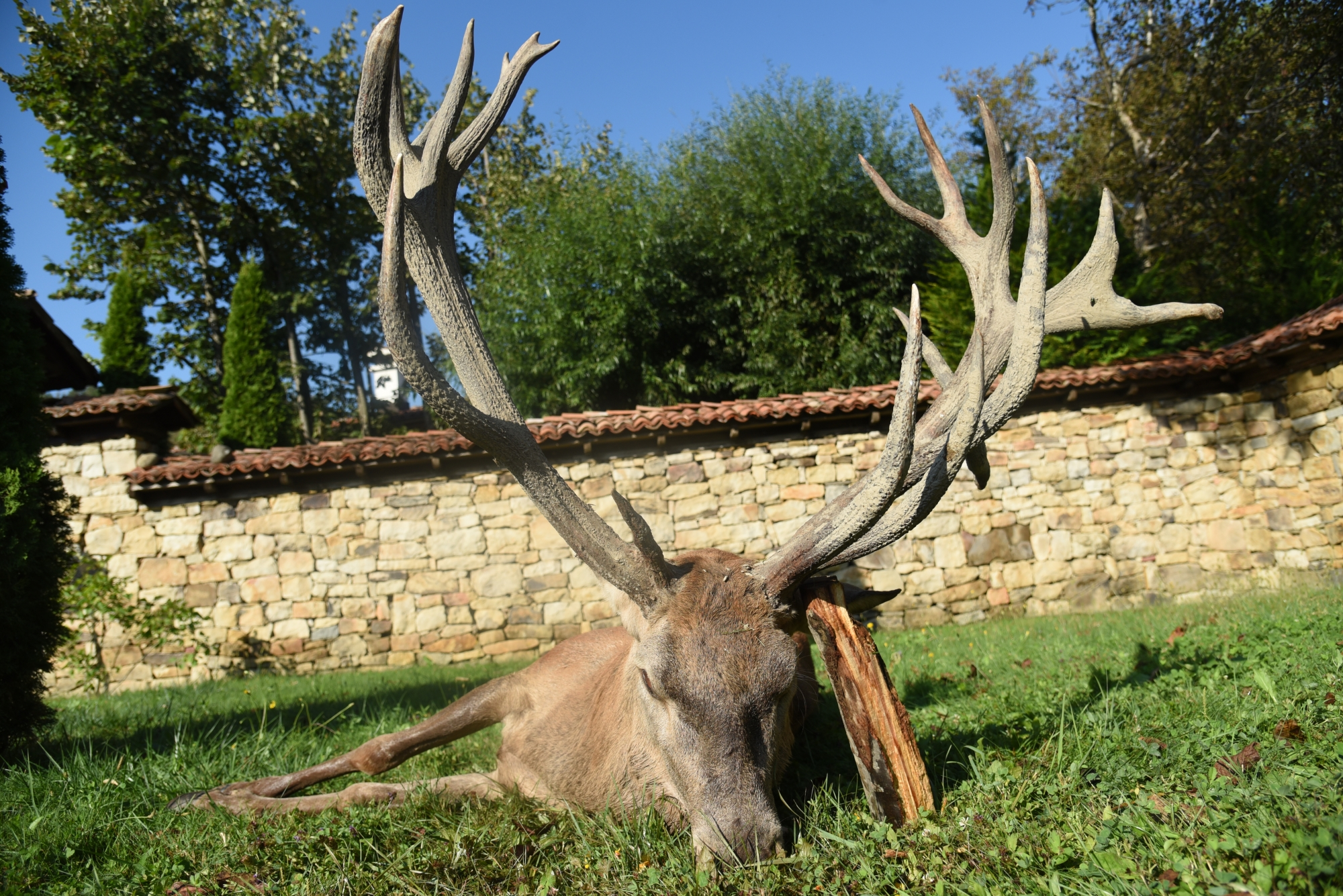 Big Game Hunt for Rutting Stags