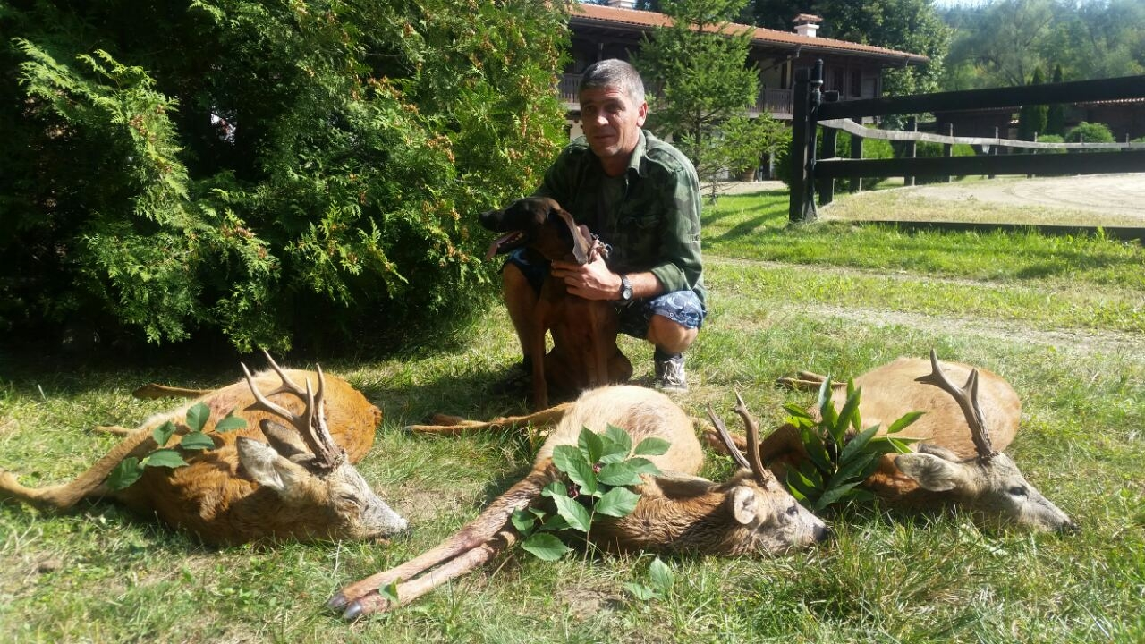 Hunting Roebuck in Europe