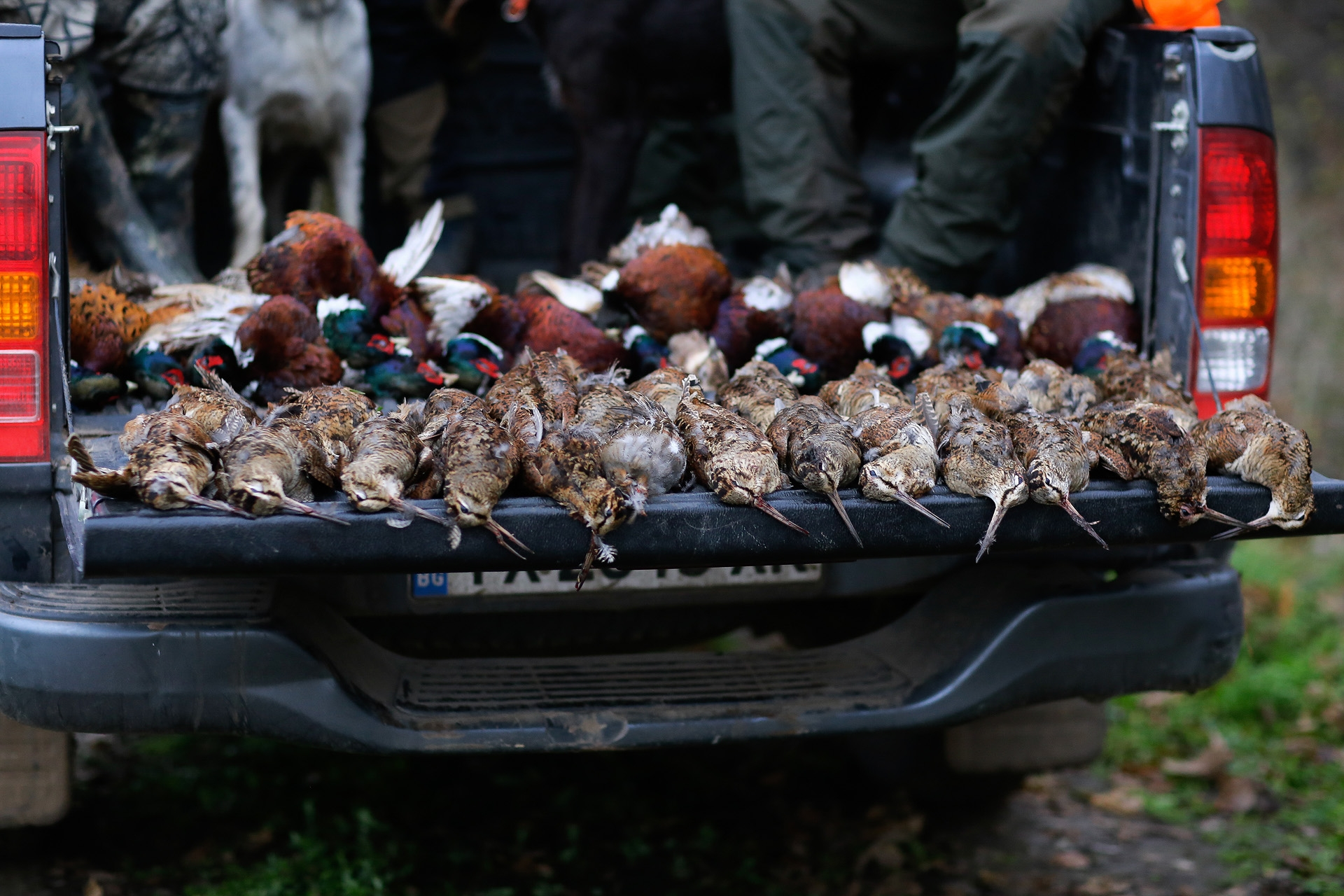 Hunt Pheasants in Europe