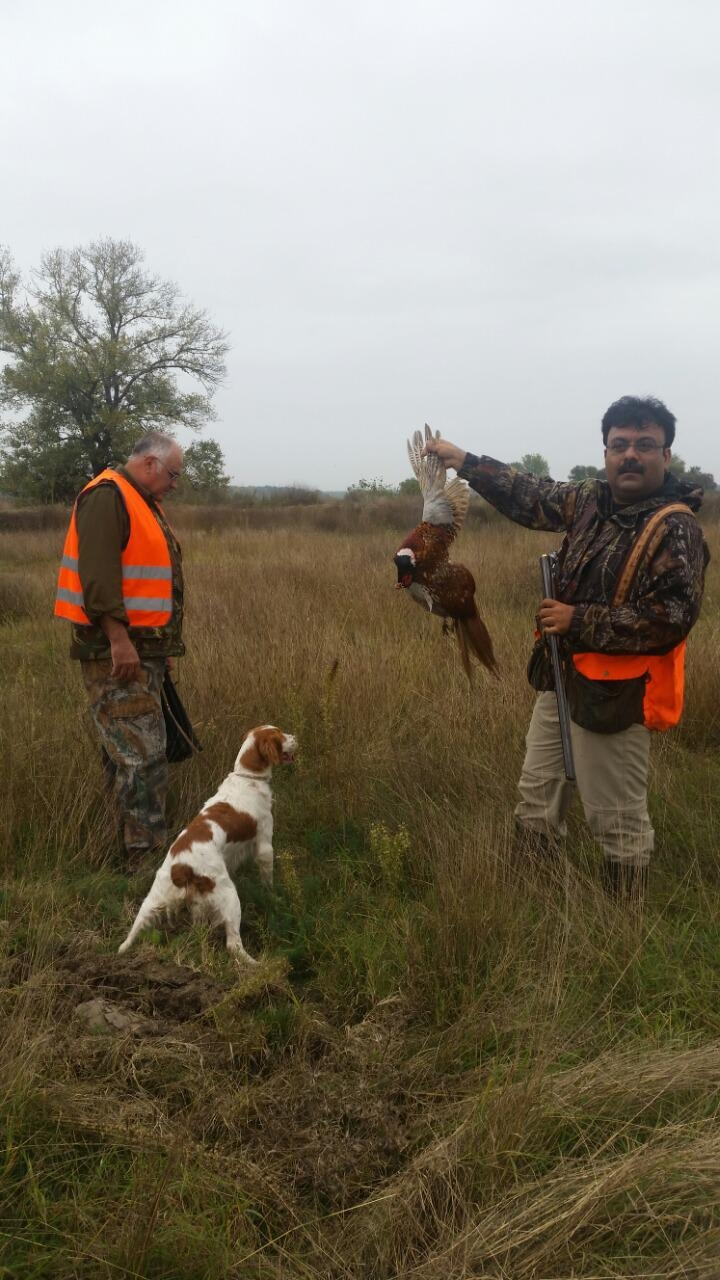 Walked Up Pheasant Hunting