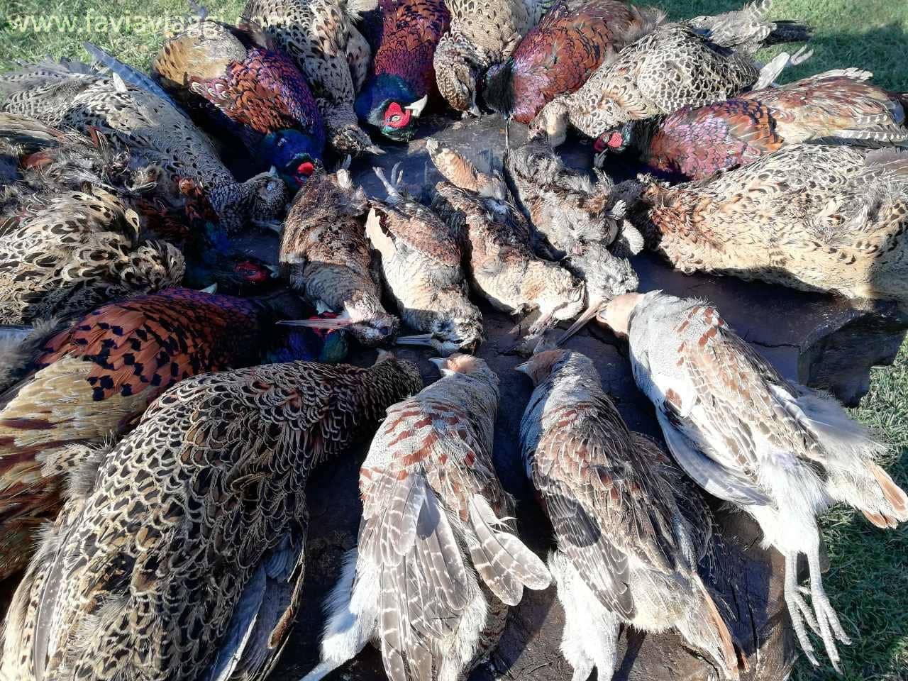 Woodcock Hunting in Bulgaria