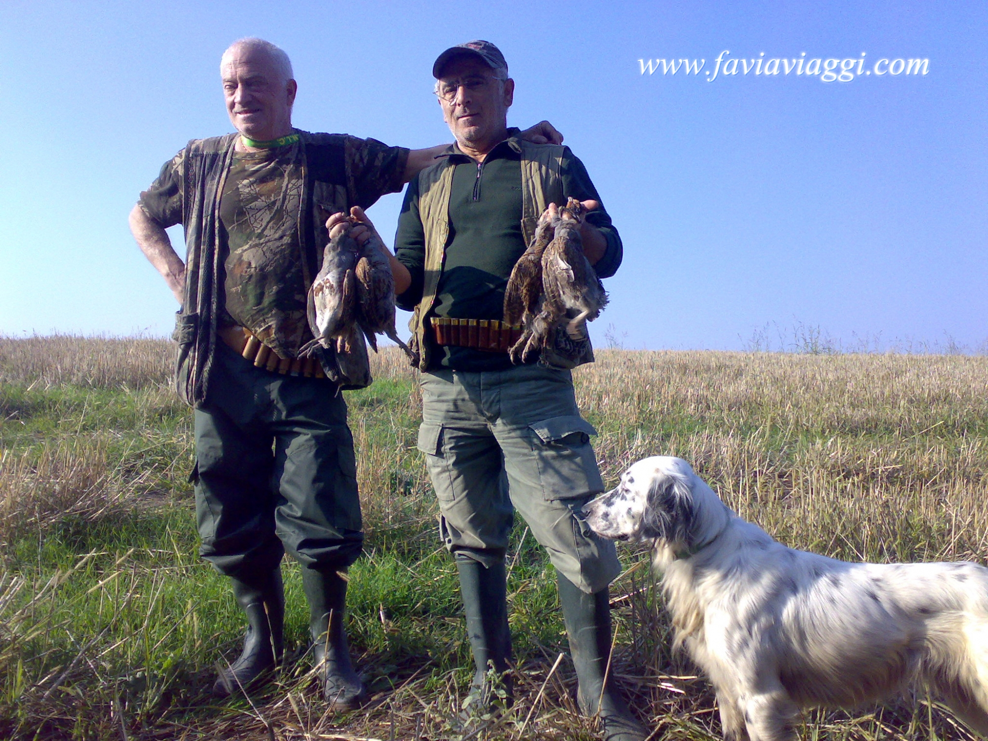 Hunting Partridges with Pointing Dog