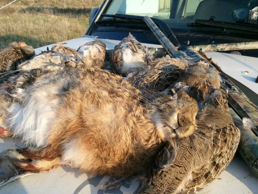 Hare Hunting Trips in Europe