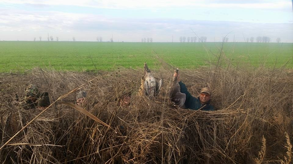 Geese Hunt in Romania