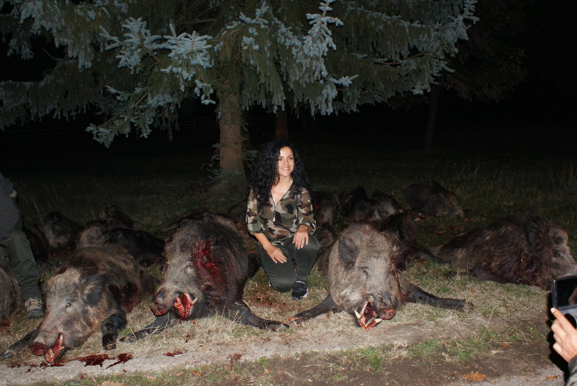 Big Game Driven Wild Boar Hunting In Bulgaria
