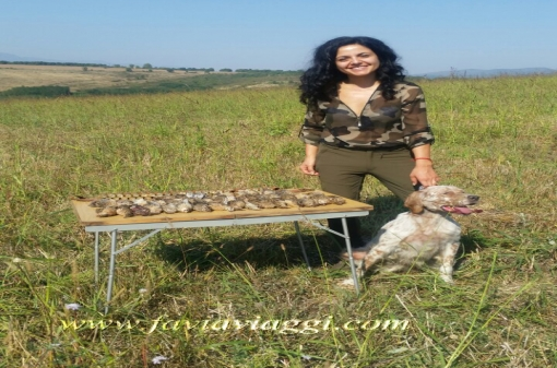 Hunt Quails With Pointer Dog