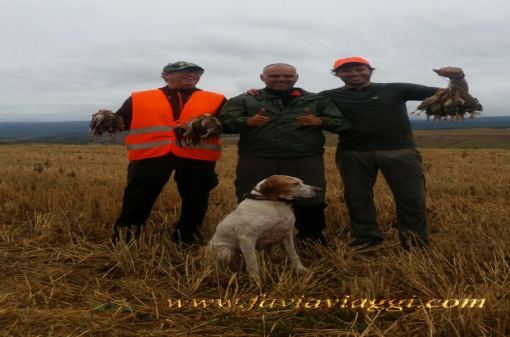 Pointer Dog Small Game Hunt