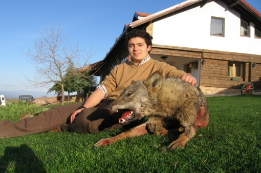 Wolf Trophy Hunting