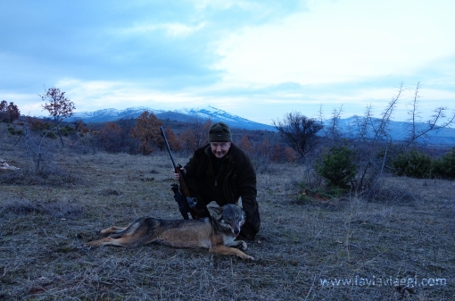 Wolf Hunting Trips