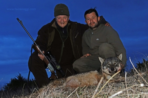 Hunt Wolves in Macedonia