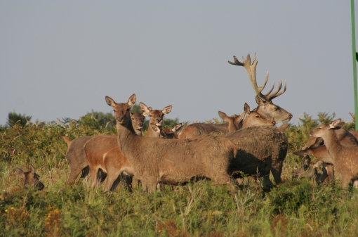 Red Deer Hunting Area