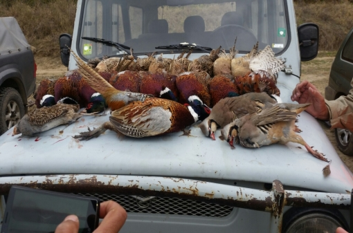 Hunt Pheasants in Bulgaria