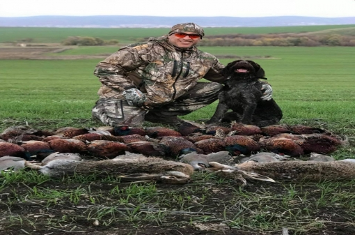 Pheasant Hunting with Pointing Dog