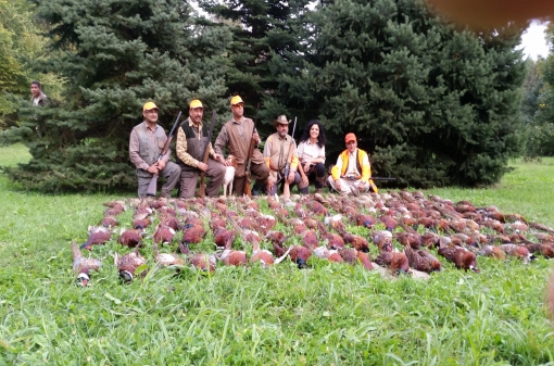Pheasant Hunting in Europe