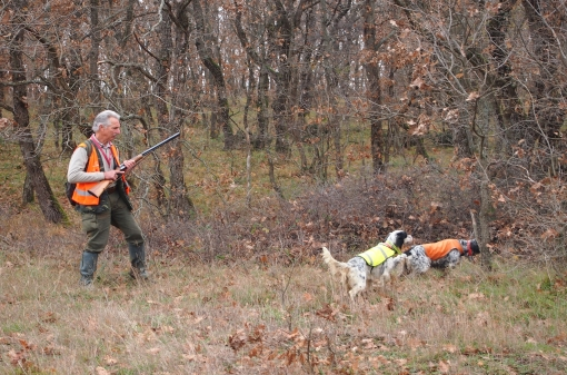 Woodcock Hunt with Pointing Dog