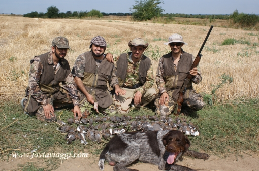 Walk Up Turtle-Dove Hunting in Europe
