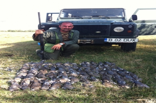 Hunting Turtle-Doves in Europe