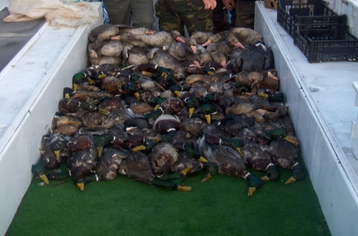 Waterfowl Hunting in Bulgaria