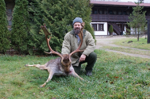 Fallow Deer Hunting Destination