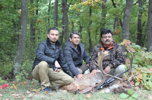 Fallow Deer Stalking in Europe