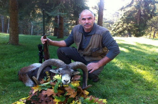 Mouflon Trophy Hunt in Bulgaria