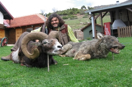 Mouflon Trophy Hunting