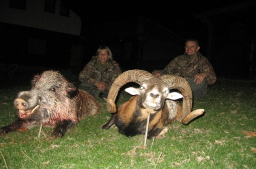 Hunting Mouflon Trophies