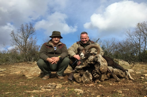 Mouflon Hunting Big Game