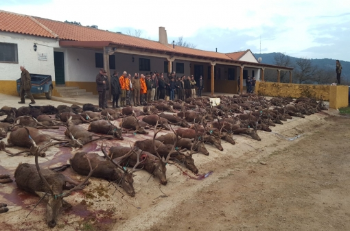 Hunting Monteria in Spain