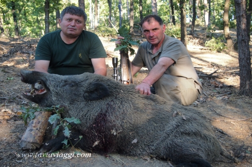 Hunting for Wild Boar Trophies