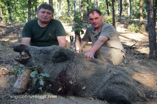 Hunting Trips for Wild Boar