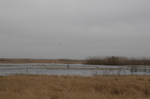 Wild Duck Hunting Area