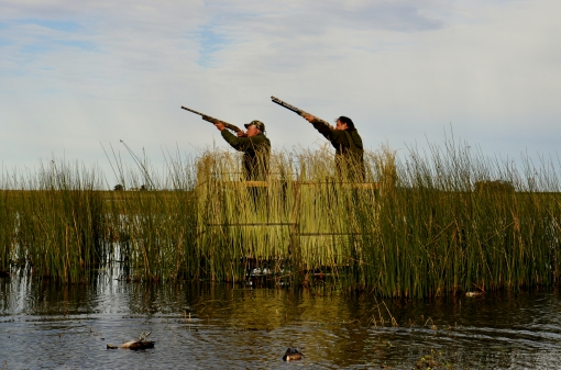 Wild Duck Hunting From a Blind