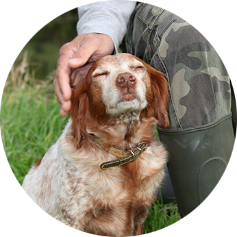 Hunting Dog Services in Bulgaria